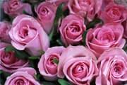 ペットお別れ花