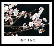 春には桜も